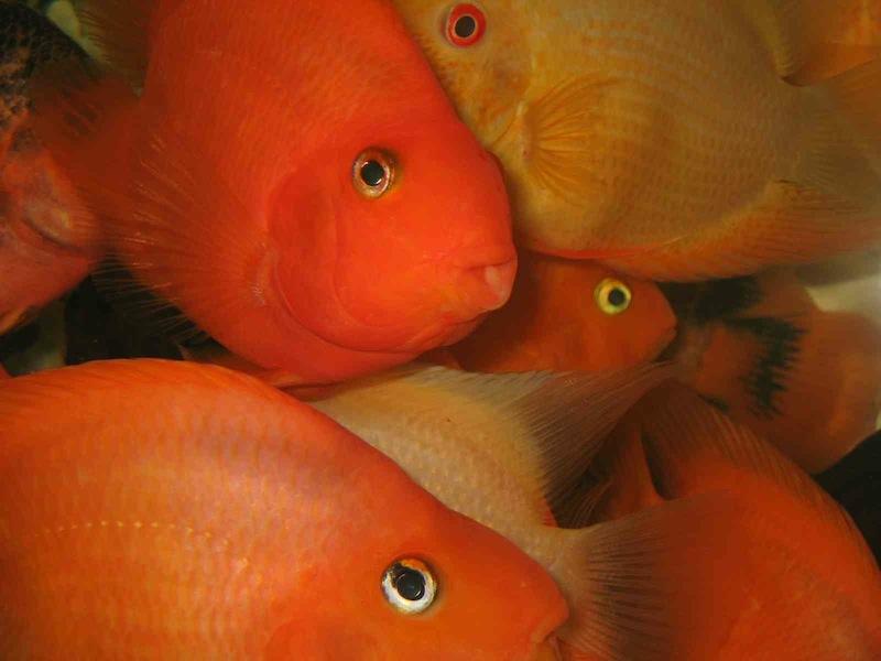 Achtung ohrwurm 10 kleine fische die schwammen im meer for Kleine fische