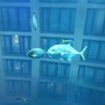 im Aquadome