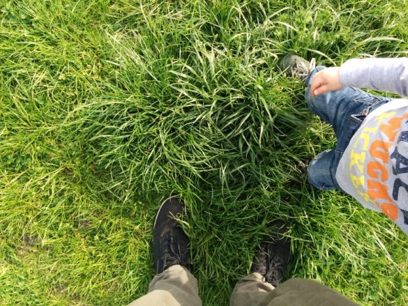 Sommer kann kommen, der Rasen ist bereit