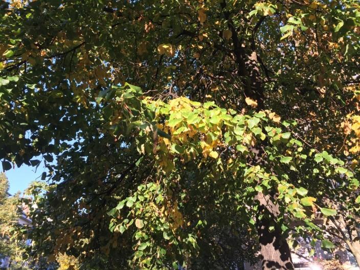 Es wird Herbst, die Blätter verfärben sich