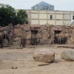 Elefanten im Tierpark