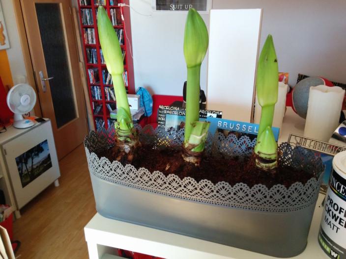 Unsere neuen Pflanzen.